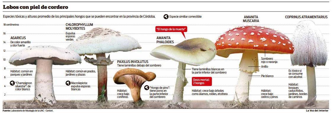 Los indicios del hongo en los pies la infección interdigital el tratamiento