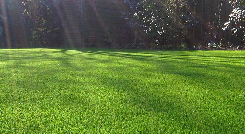 Tiempo de sembrar qu c sped es mejor para c rdoba la voz - Plantar cesped natural ...