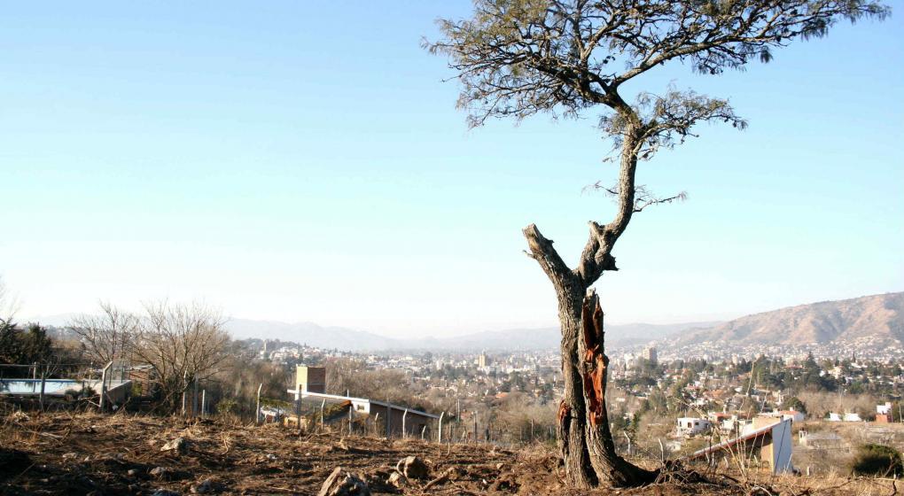 http://www.lavoz.com.ar/ciudadanos/bosques-investigadores-cuestionan-el-metodo-propuesto-para-cambiar-el-mapa