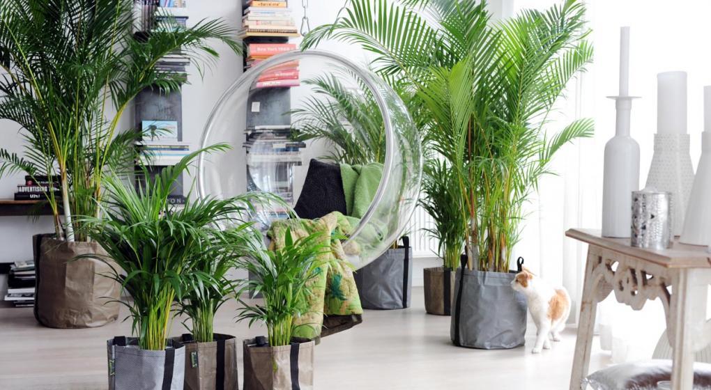 cules son las plantas de interiores ms apropiadas para tu casa