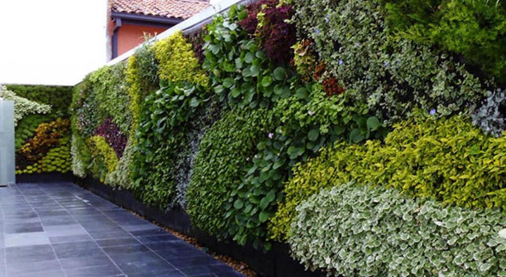 Tengo un jard n en mi pared qu plantas poner en un for Jardines en paredes