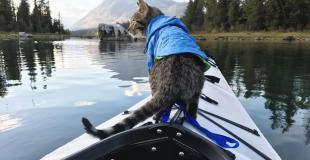La historia del gato recorre el mundo junto a sus dueños