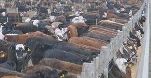 A partir de marzo se vienen cambios en el comercio ganadero