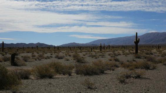 En la recta del Tin Tin hay un sendero para recorrer a pie el Parque Nacional Los Cardones y los cactus de gran porte. (Mario Cherrutti)
