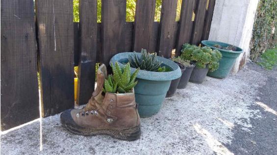 Después del camino, algunos zapatos se transforman en macetas. (Mariana Otero)
