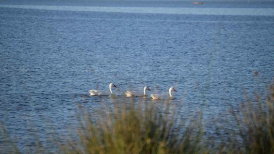 Laguna de Rocha, ideal para contemplar paisajes y disfrutar del agua y el sol. (Ministerio de Turismo de Uruguay)