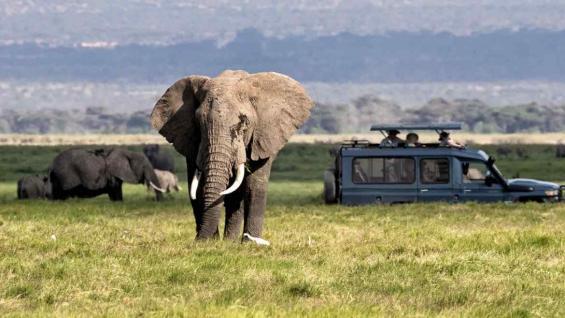 Los parques en Nairobi se caracterizan por la libertad que tienen sus animales. (123RF)