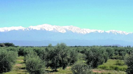 La Rioja, entre valles, ríos, montañas y quebradas, ofrece un muestrario de bodegas y olivares que trazan una ruta que abarca Aimogasta, Chilecito y Nonogasta, entre otros lugares.