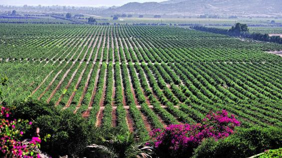 Adobe Guadalupe abarca poco más de 24 hectáreas donde se producen distintas cepas. Ubicado en una hacienda, tiene un bed & breakfast que posibilita instalarse en el viñedo.
