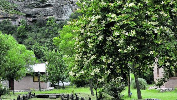 Cerro Colorado, en cuyas laderas se testimonia la cultura aborigen.
