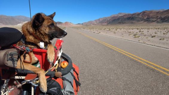La Ruta Nacional 40 recorre el país de norte a sur y trepa a casi 5.000 msnm en el Abra del Acay (Salta), siendo la más alta de América (Rodar Tierra).