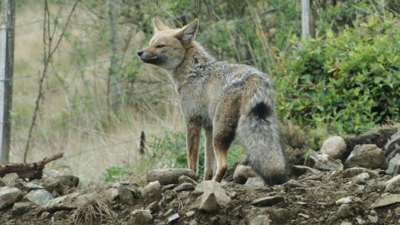 La zona es considerada una reserva natural, por lo que es común cruzarse con animales autóctonos. (Guillermo Marinone)