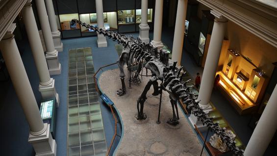 """Dino. Ejemplar de """"Diplodocus Carnegii"""", el preferido del público infantil desde la película Jurassic Park. Arriba: mariposa expuesta en la colección de entomología."""
