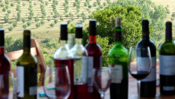 Cata con los mejores aromas. Foto: Sitio Oficial Ruta Gourmet Sierra de los Caracoles.