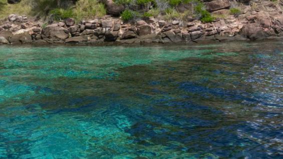 En una visita a Cartagena no puede faltar el contacto con la naturaleza de los manglares, las playas, atracciones y actividades acuáticas. (Pixabay)