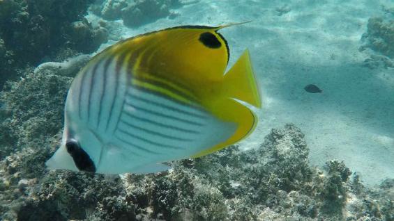 La alta concentración de corales permite un ecosistema increíble. (Marcelo López)
