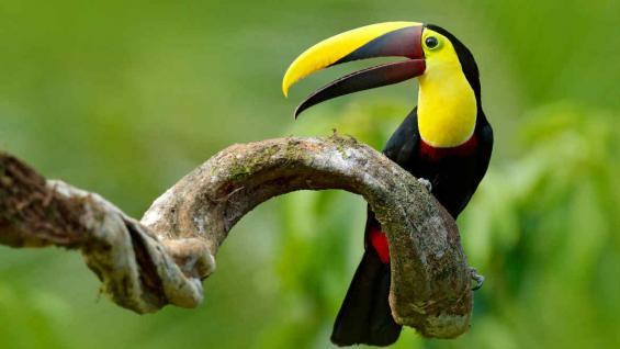 Panamá es un país muy generoso con muchos lugares y curiosidades para visitar. (123RF)