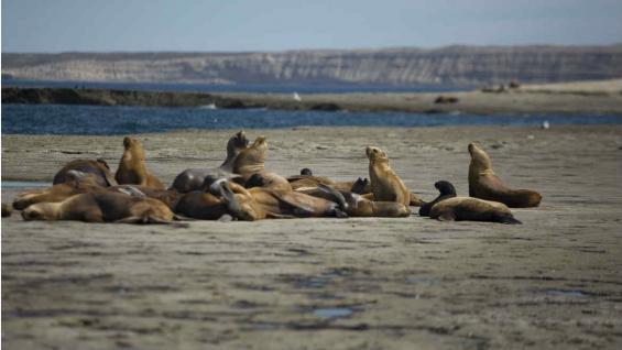 En las playas de la península descansan lobos y elefantes marinos. (Mario Cherrutti)