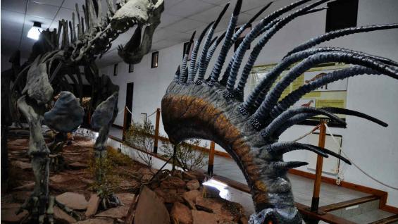 Reconstrucción y exhibición en el Museo Municipal Ernesto Bachmann del Bajadasaurus pronuspinax. (Bibiana Fulchieri)