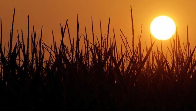 Calor en el cinturón agrícola. El 30 por ciento del maíz estadounidense, en estado malo o muy malo (AP).