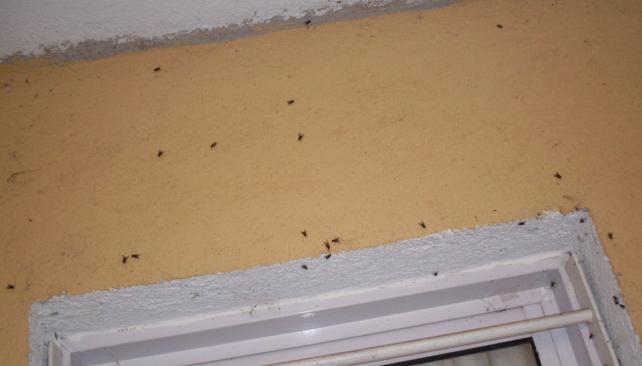 Río Ceballos. Una casa en barrio Los Vascos, llena de moscas (La Voz).