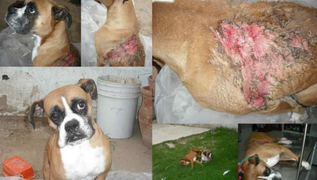 El ataque contra el cachorro Simba motivó una denuncia ante una unidad judicial.