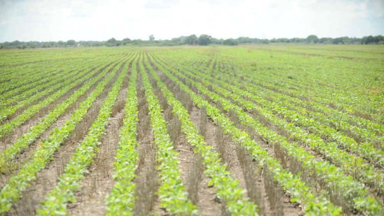 ARRENDAMIENTOS.+En+promedio%2C+se+pagan+ocho+quintales+de+soja+por+hect%C3%A1rea.