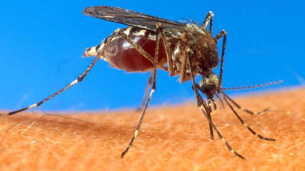 Información útil: 8 pasos para saber si tenés Dengue